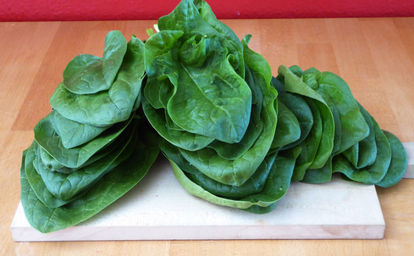 Spinat geerntet und den Frühling vorbereitet