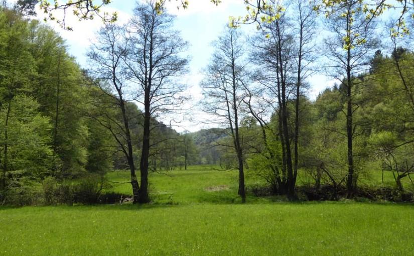 Wanderung durchs Naafbachtal