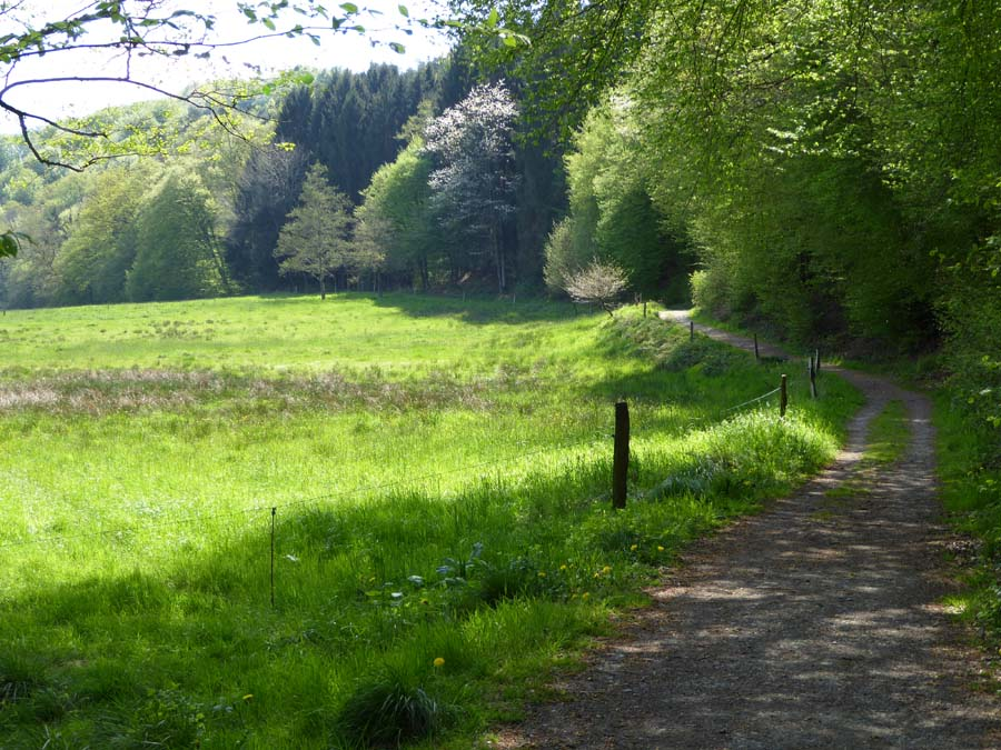 Talweg im Naafbachtal