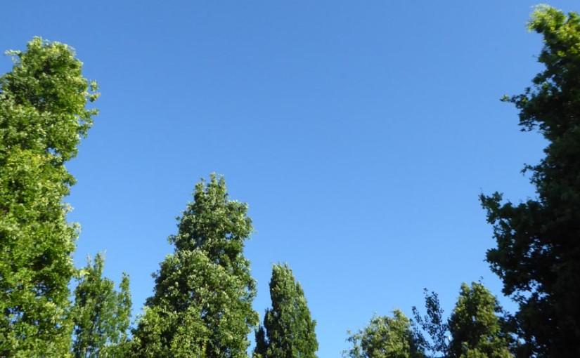 Blauer Himmel zwischen den Bäumen