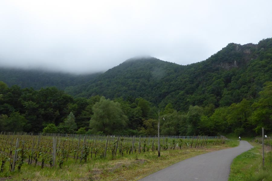 Nebel und Weinberge