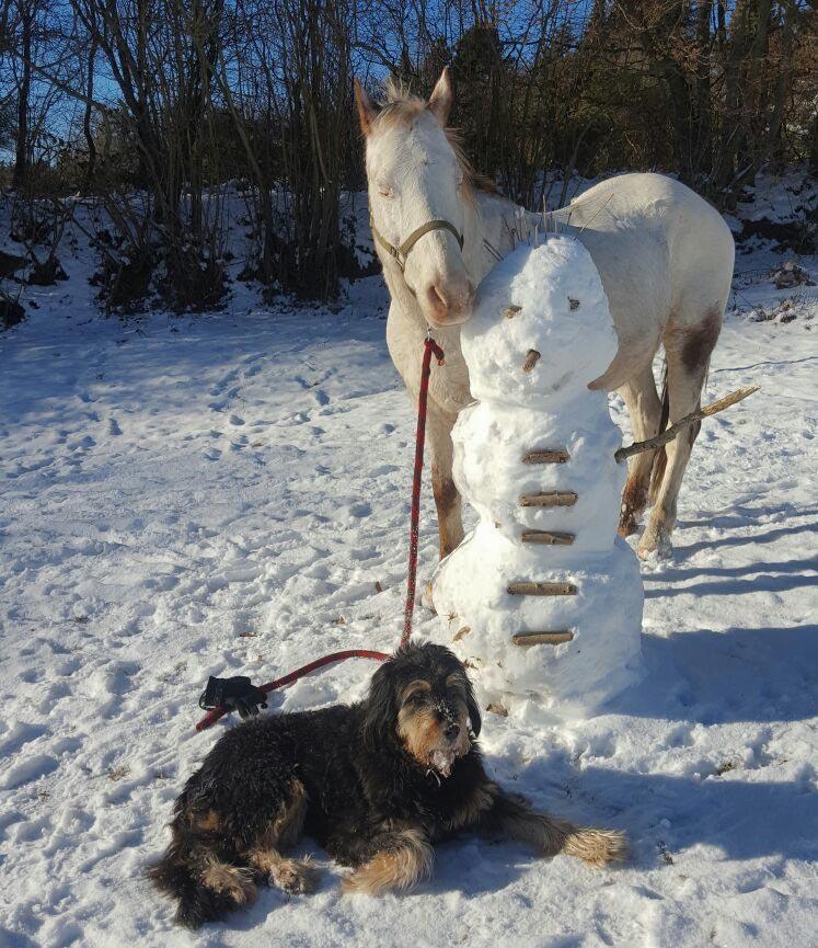 Mit Pferd und Hund