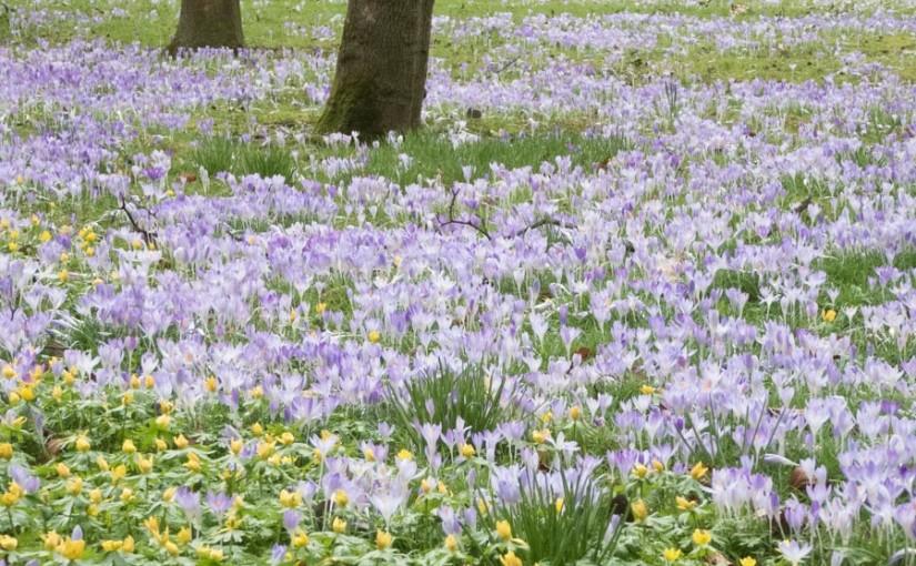 Frühling in der Flora, Köln
