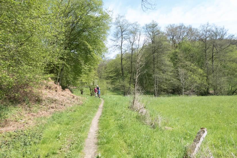 Der Weg im Naafbachtal