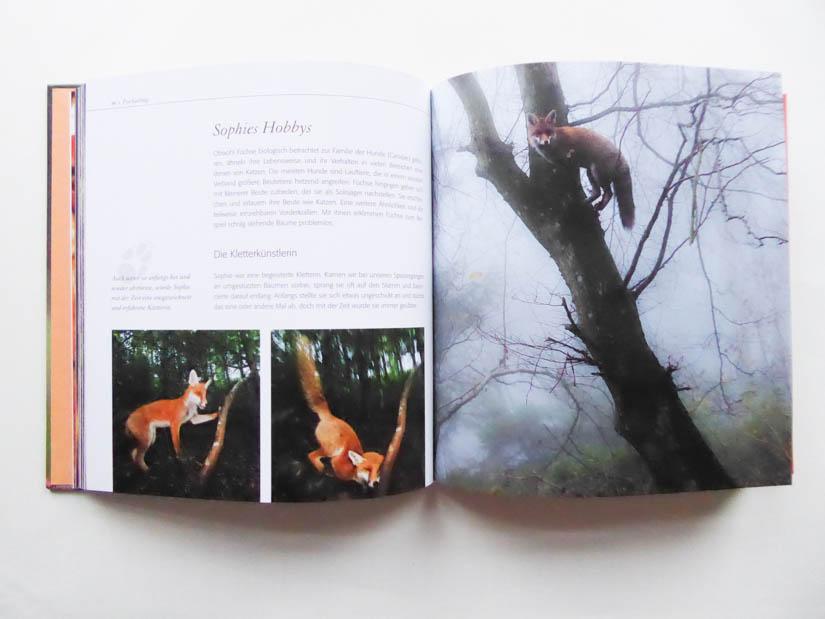 """Sophie beim Klettern im Buch """"Fuchs ganz nah"""""""