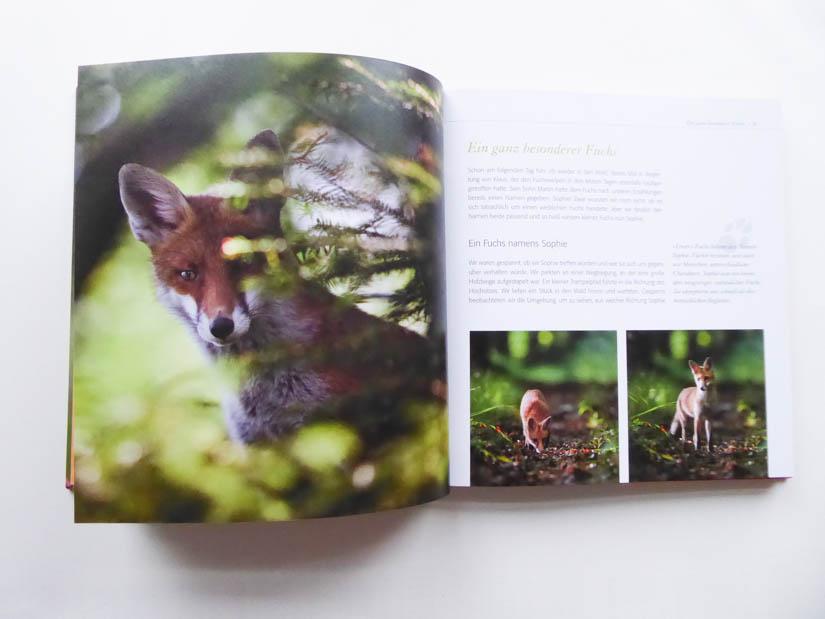 """Die Füchsin Sophie im Buch: """"Fuchs ganz nah"""""""