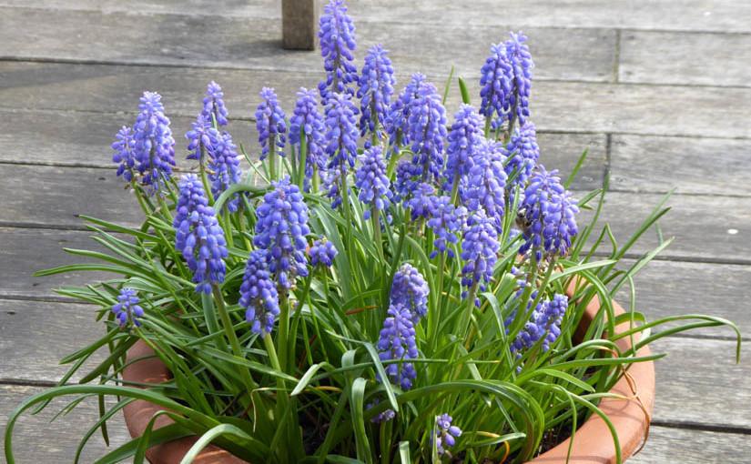Gärtnern im Frühling