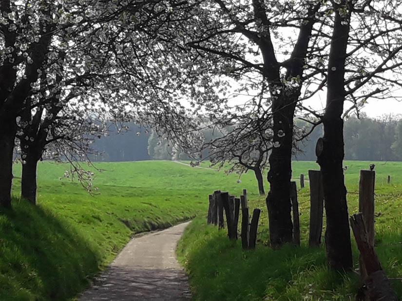 Der Weg unter blühenden Bäumen hindurch durch die Wiesen: einfach wunderschön