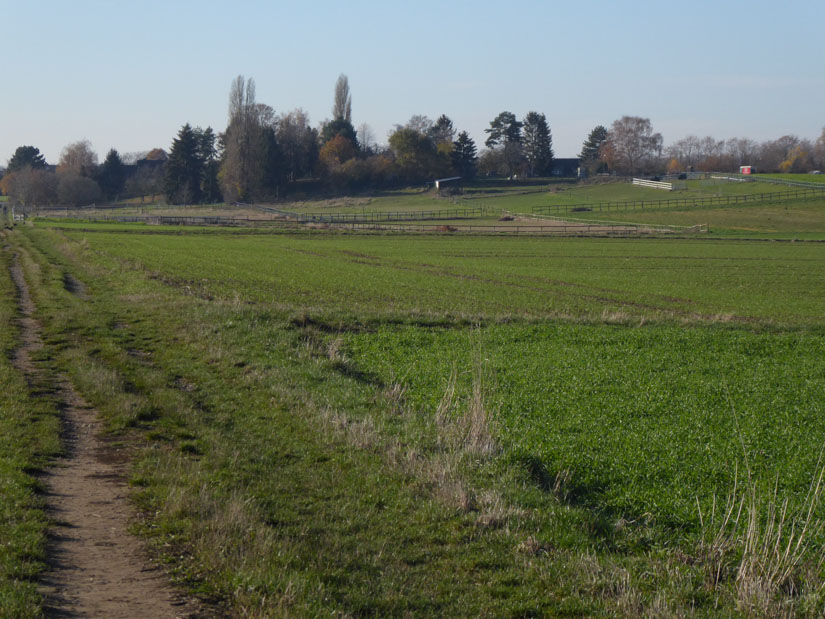Weiden bei Langel