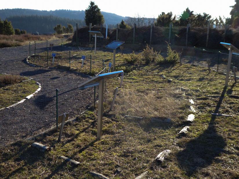 Der angelegte Heidegarten mit den charakteristischen Pflanzen