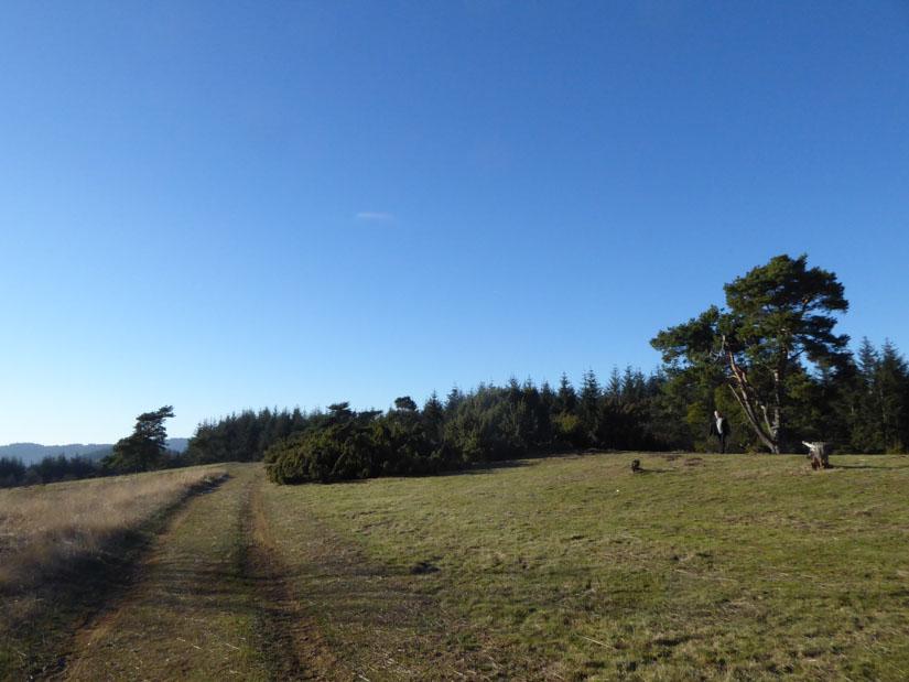 Schöner Wiesenweg und knorrige Bäume