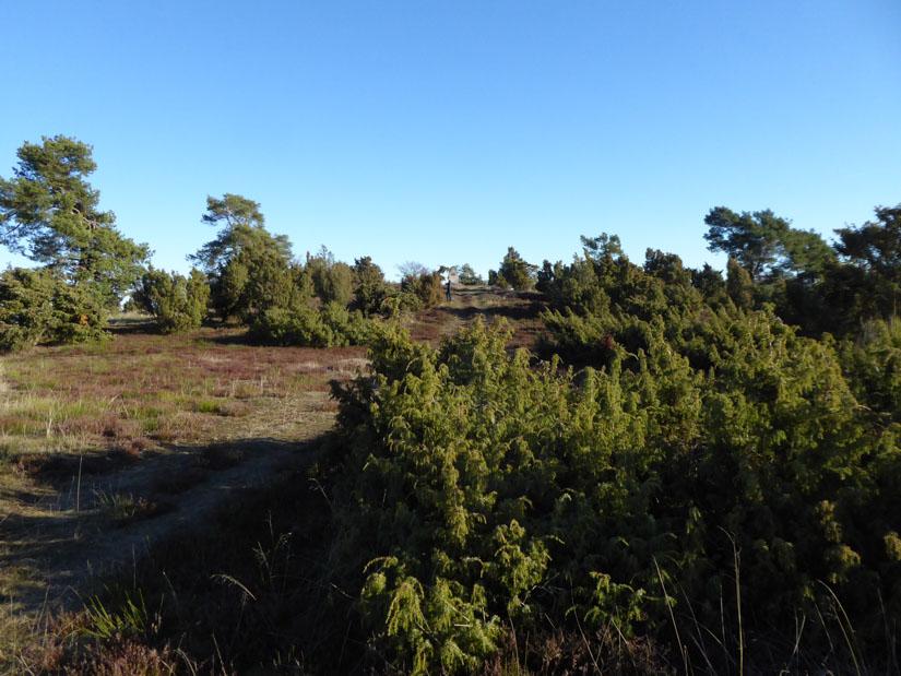 Auf einem schmalen Pfad mitten durch die Heide