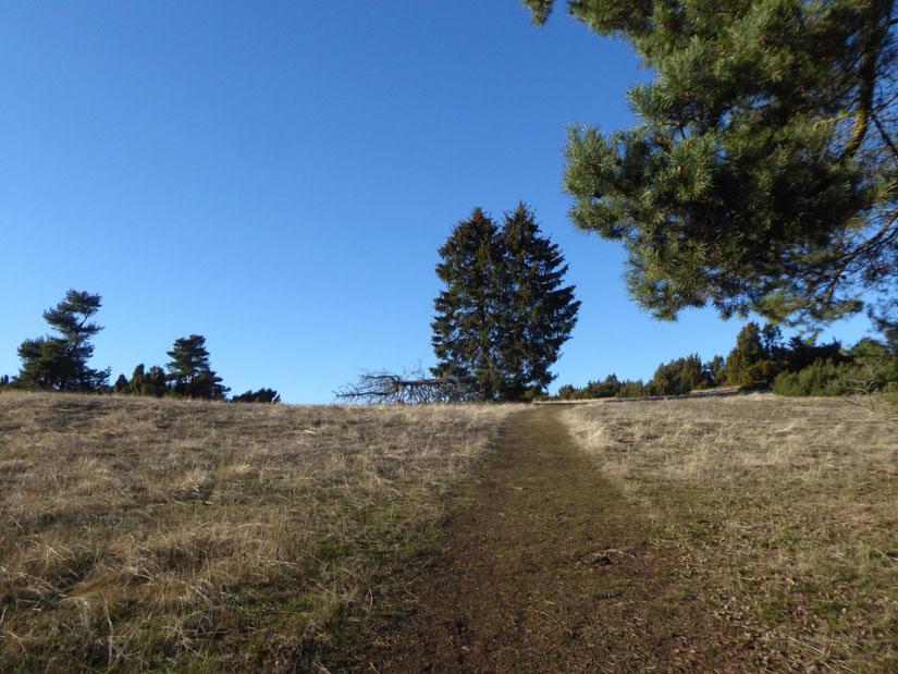 Schöner Wiesenweg auf dem Heidebüchel